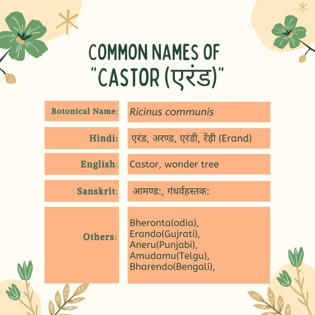 Common Names of Eranda (Castor oil plant)Herbal-Arcade