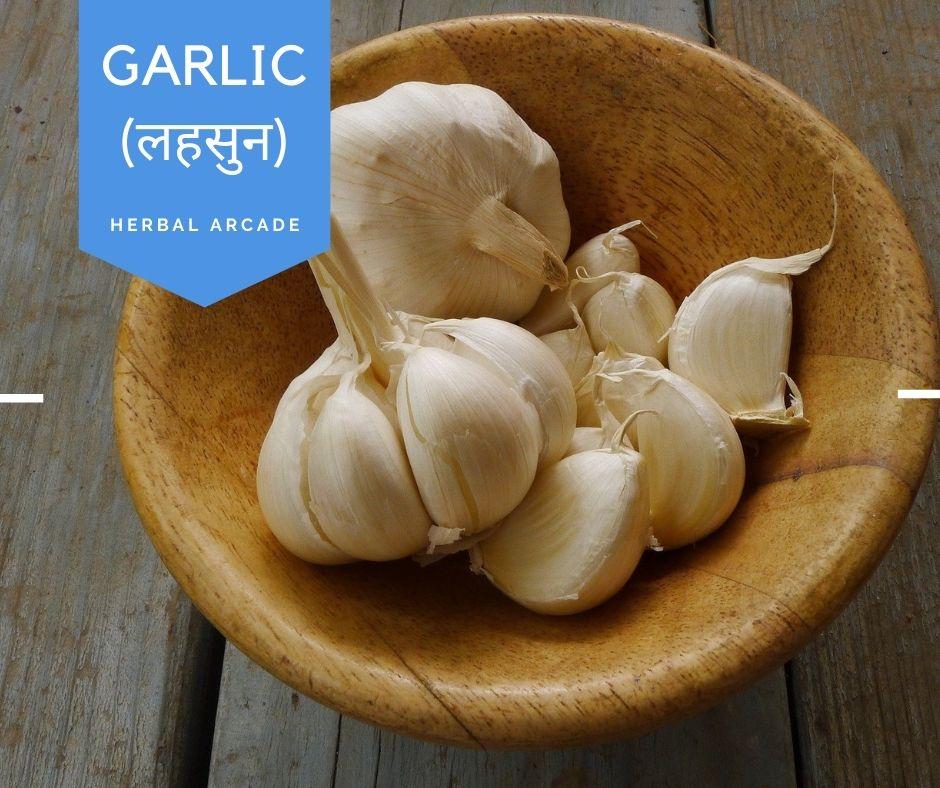 garlic Benefits Herbal Arcade