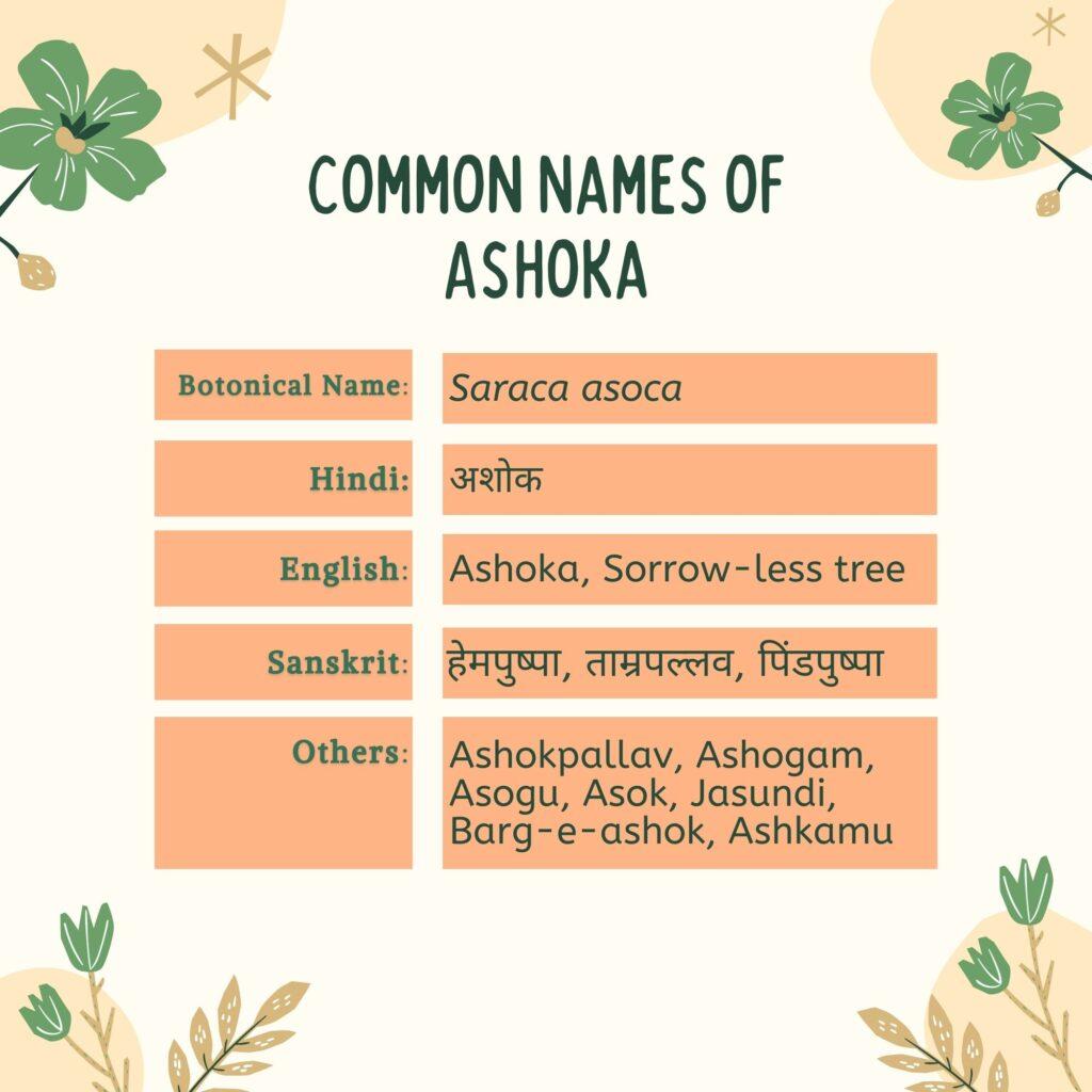 Common Names of Ashoka (Saraca asoca)