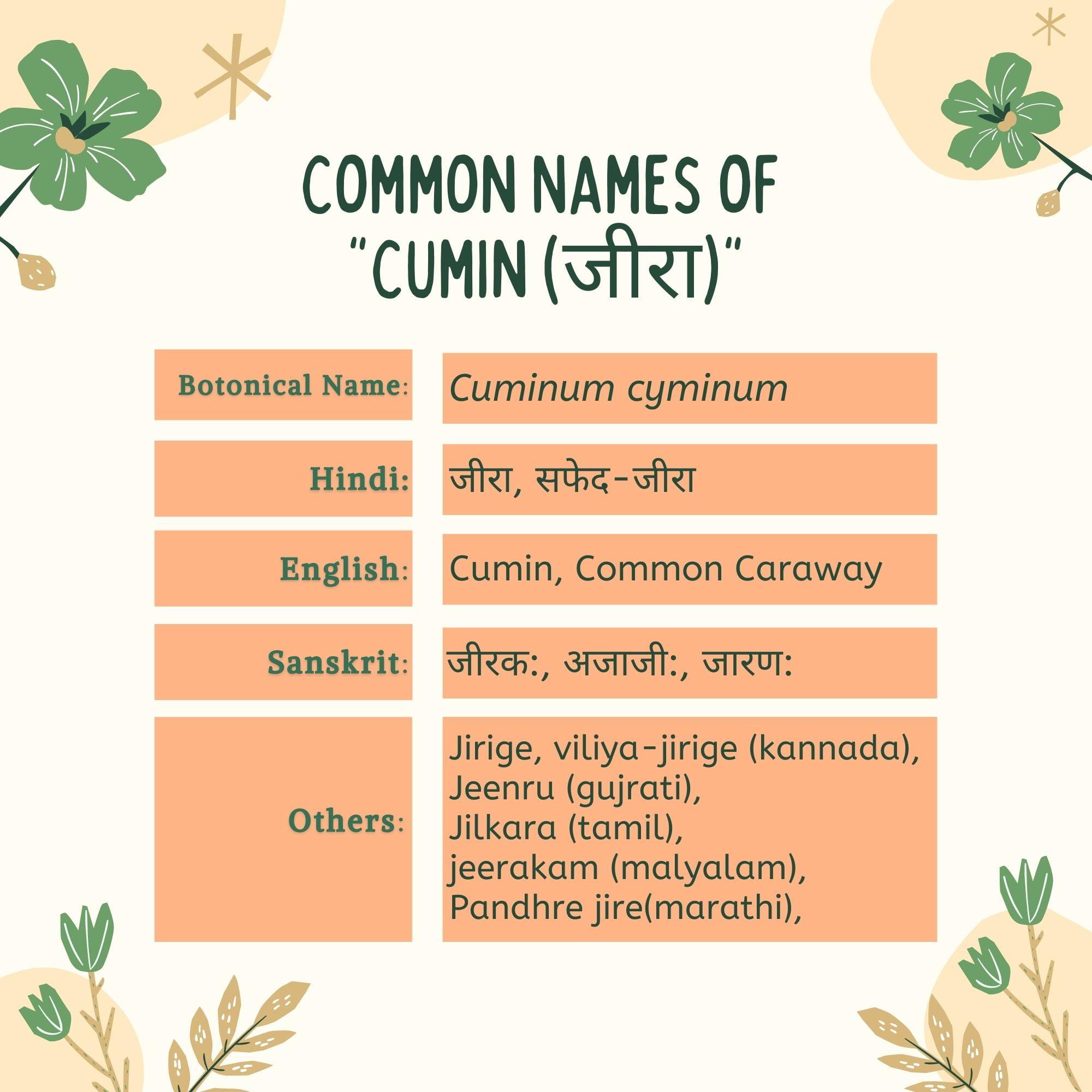 Jeera cumin Common Names | Herbal Arcade