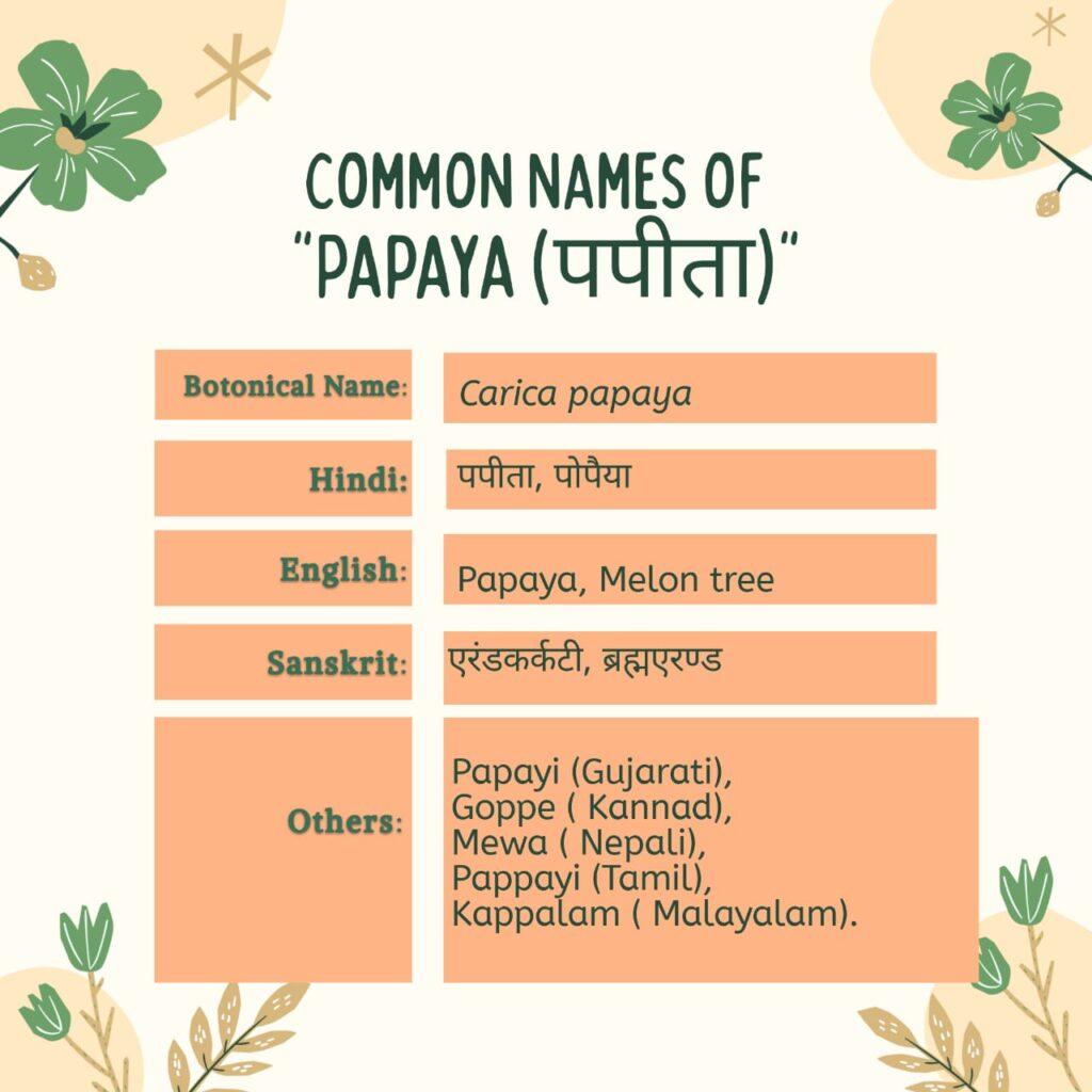 papaya (पपीता) common names Herbal Arcade