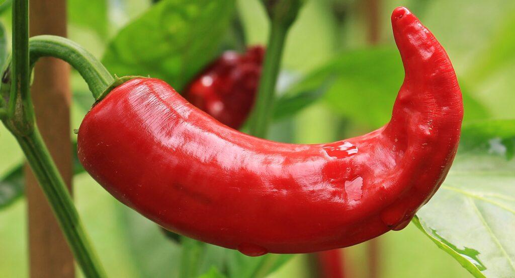 Red Chilli Benefits | Herbal Arcade