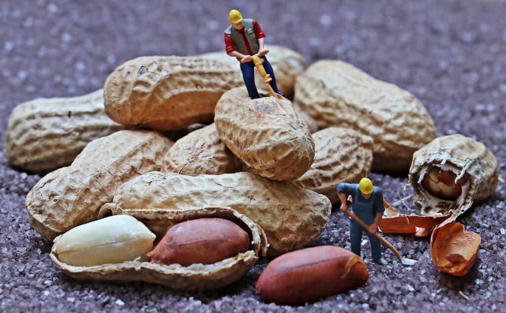 Peanut (Groundnut) Herbal Arcade