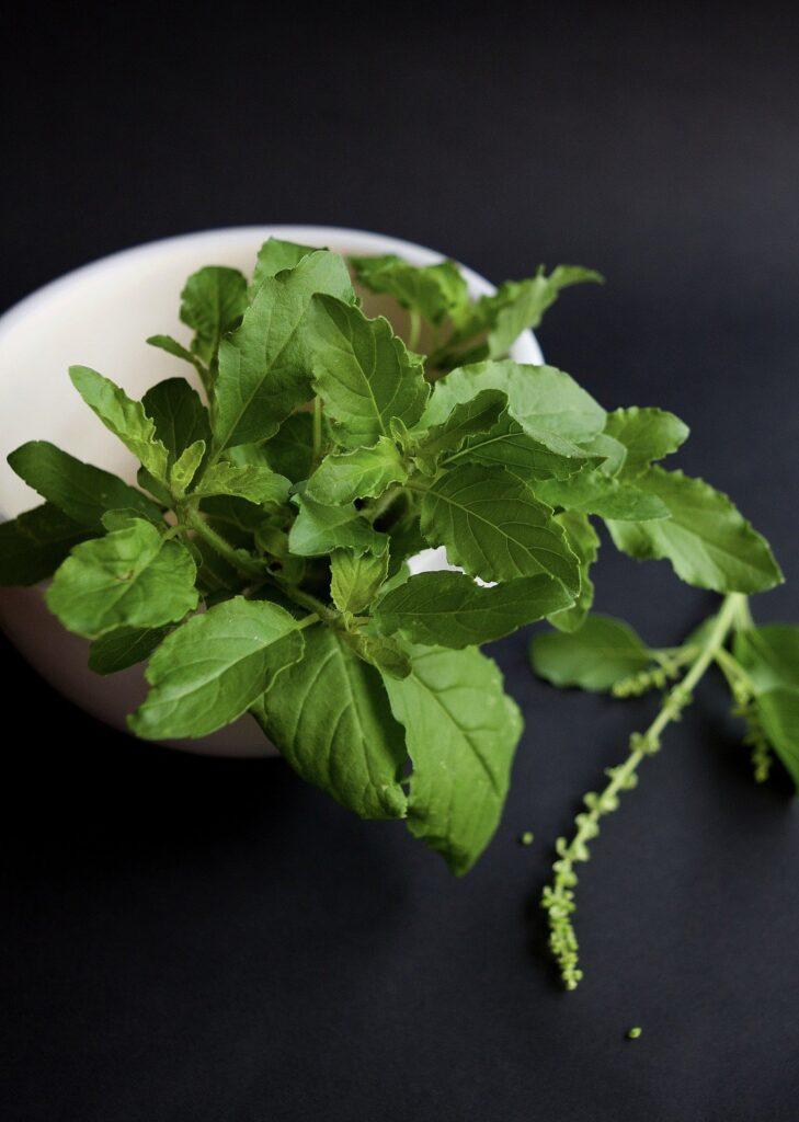 Holy basil (Tulsi) benefits herbal arcade
