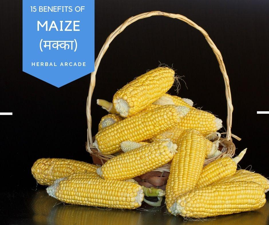 15 benefits of maize, Corn (Herbal Arcade)